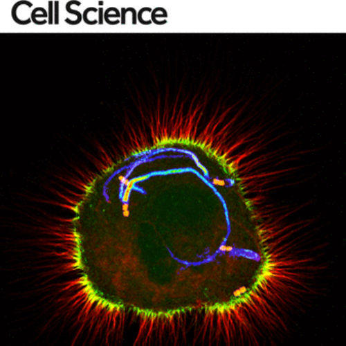 Ana gets cover of Journal of Cell Science
