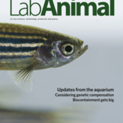 Zebrafish Infection and Immunity 2019 meeting report highlighted in Lab Animal